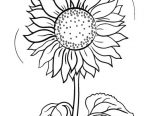 detailed sunflower coloring pages