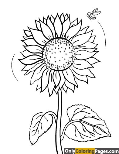 detailed-sunflower-coloring-pages