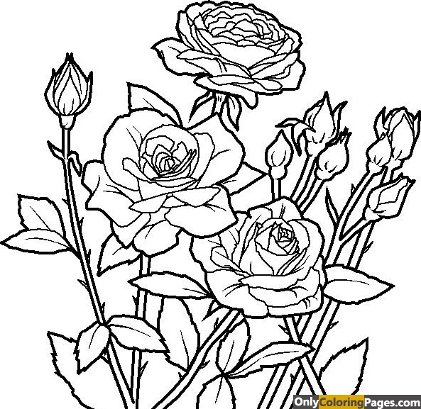 realistic rose coloring pages for adults