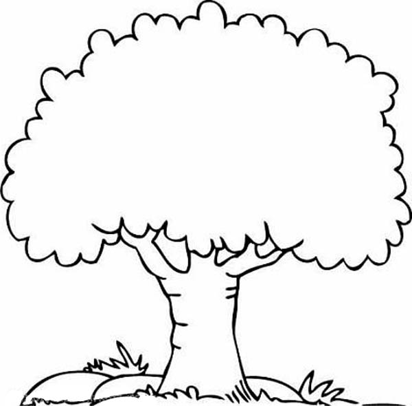 Tree Coloring Pages 07