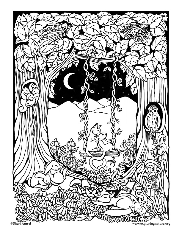 forest coloring pages amazing