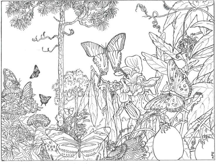 forest coloring pages new