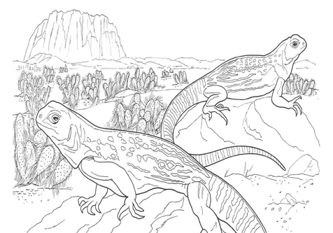 Sahara Desert Animals Coloring Pages