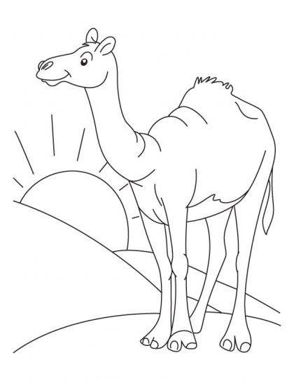 Sahara Desert Camel and Sun Coloring Pages