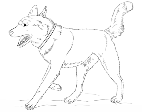 Running Siberian Husky coloring page