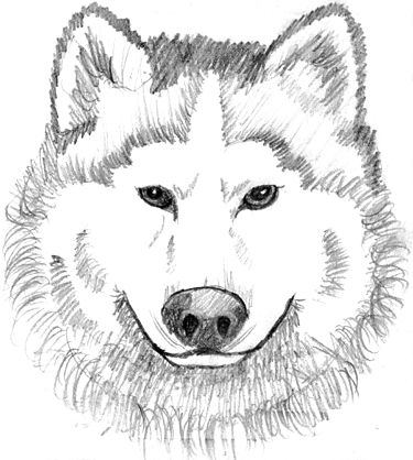 husky face coloring page
