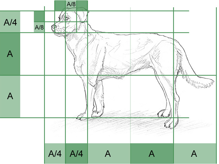 How to Draw a Dog Step by Step for Beginners Slow and Easy