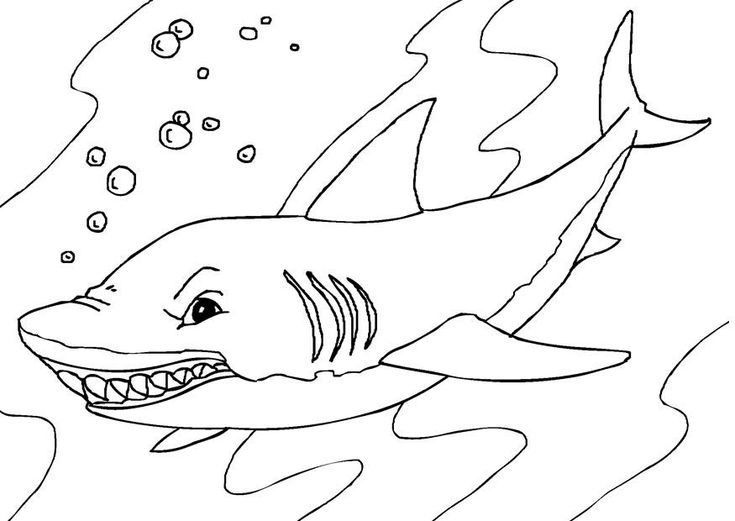 toddler Free Printable Shark Coloring Pages For Kids preschool