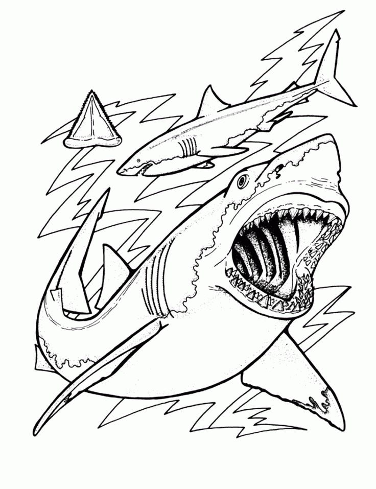 online Free Printable Shark Coloring Pages For Kids for sunday school