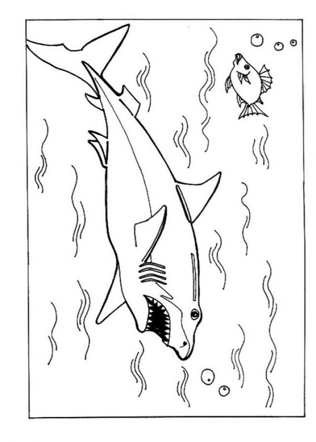 for adults Free Printable Shark Coloring Pages For Kids for toddlers