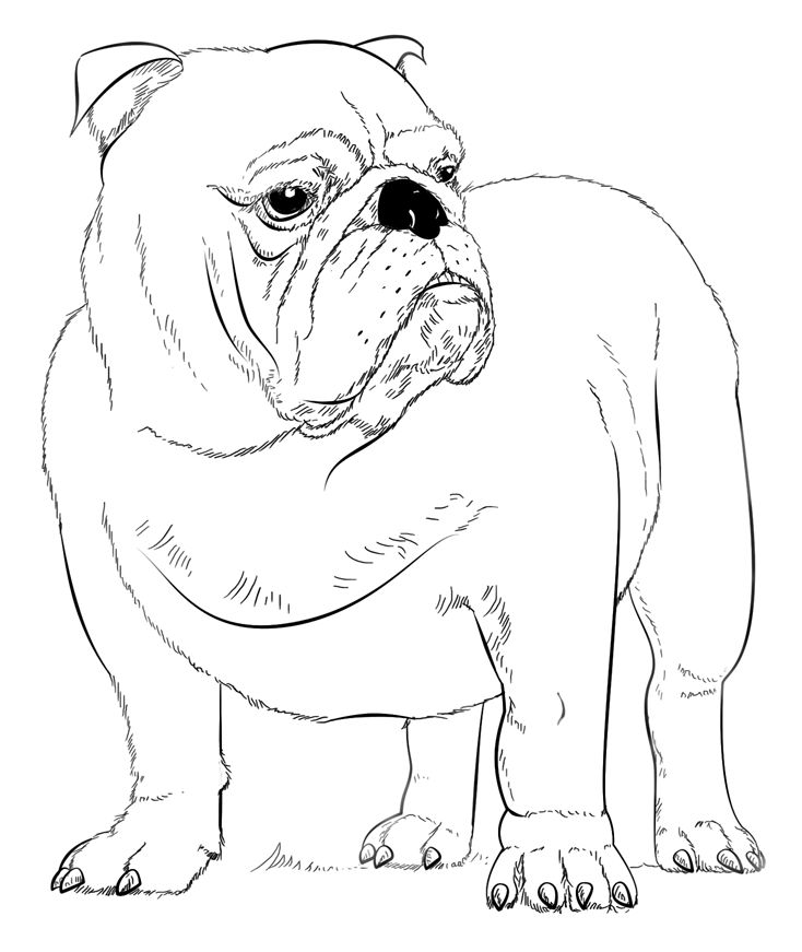 Pdf Bulldog Coloring Pages Best Coloring Pages For Kids
