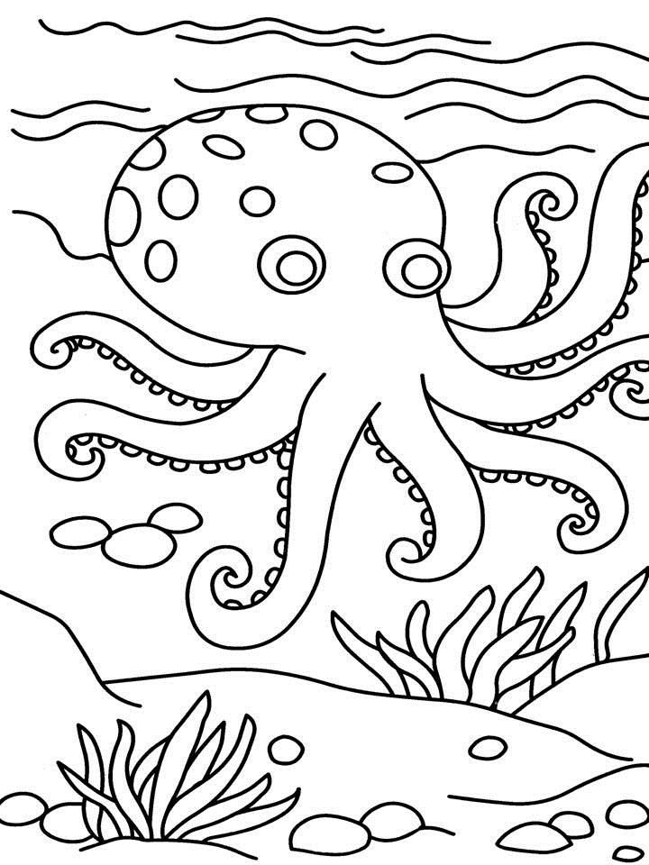 free Free Printable Octopus Coloring Pages For Kids free