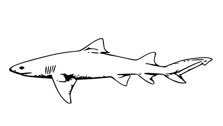 preschool Free Printable Shark Coloring Pages For Kids toddler