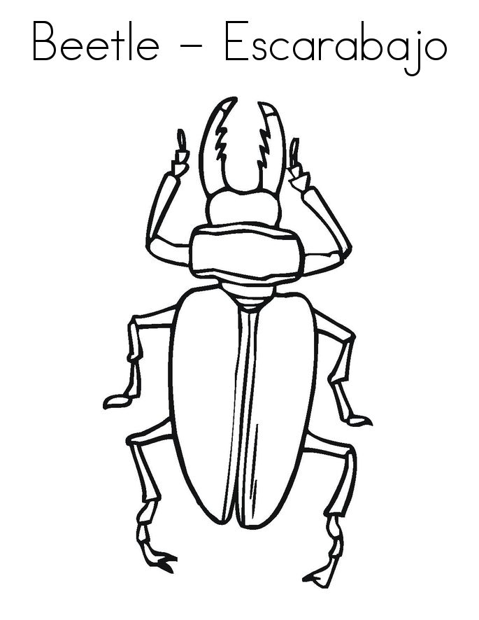 for adults Free Printable Bug Coloring Pages For Kids preschool