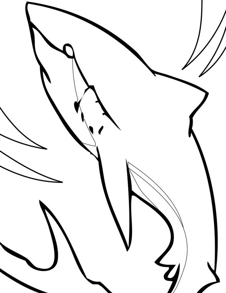 for adults Free Printable Shark Coloring Pages For Kids already colored