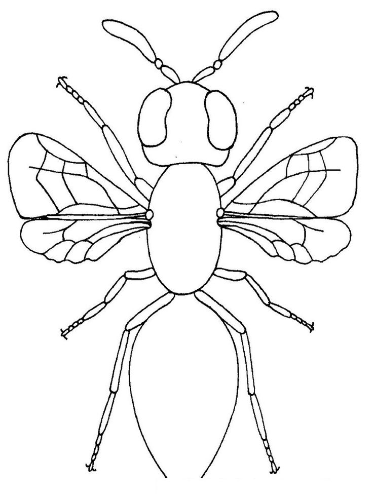 for adults Free Printable Bug Coloring Pages For Kids for boys