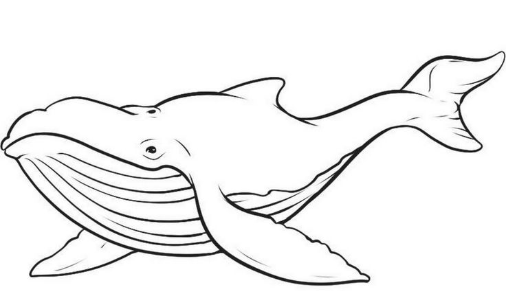 for adults Free Printable Whale Coloring Pages For Kids pdf
