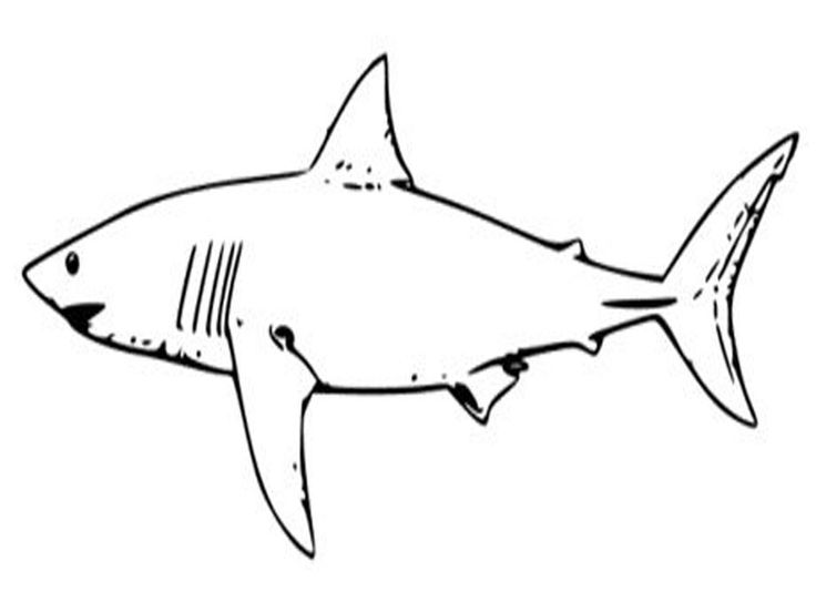 simple Free Printable Shark Coloring Pages For Kids preschool