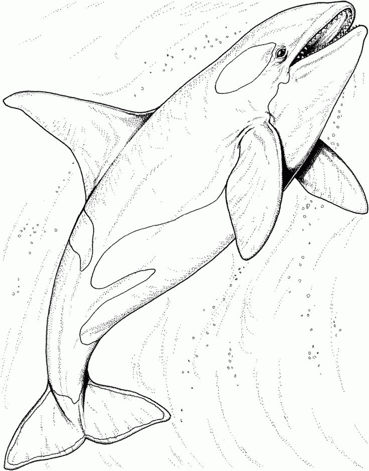 toddler Free Printable Shark Coloring Pages For Kids for toddlers
