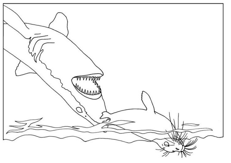 free Free Printable Shark Coloring Pages For Kids printable