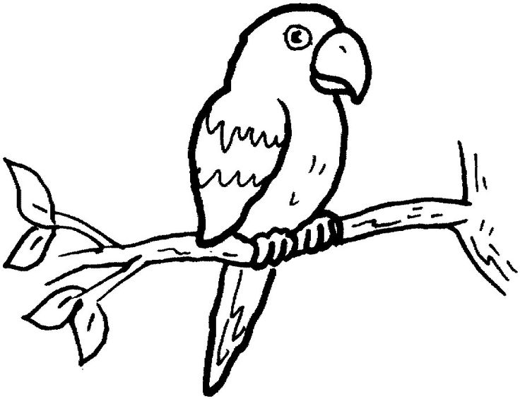 pdf Free Printable Parrot Coloring Pages For Kids for teens