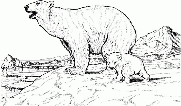 free printable Free Printable Polar Bear Coloring Pages For Kids simple