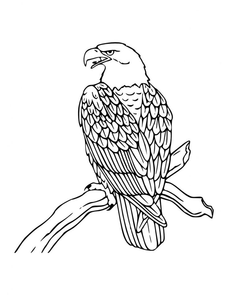 for toddlers Free Printable Bald Eagle Coloring Pages For Kids for girls
