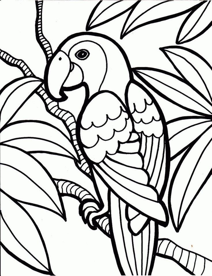 preschool Free Printable Parrot Coloring Pages For Kids online