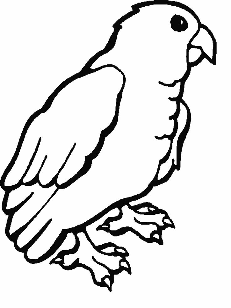 for adults Free Printable Parrot Coloring Pages For Kids for boys