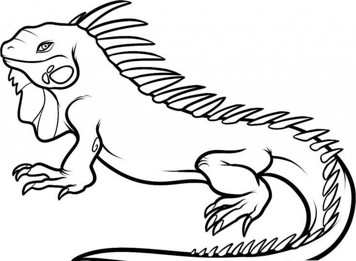 easy Free Printable Iguana Coloring Pages For Kids easy