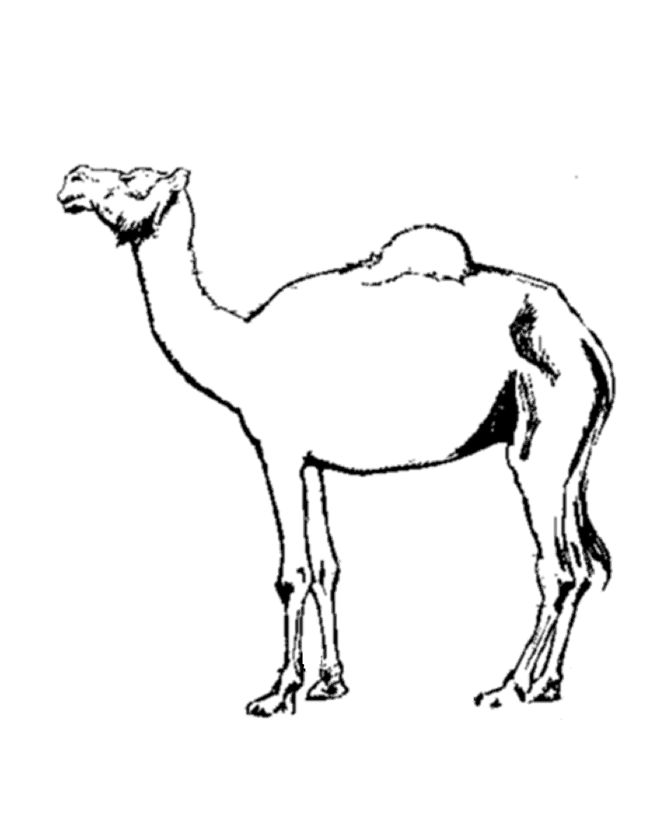 for kids Free Printable Camel Coloring Pages For Kids printable