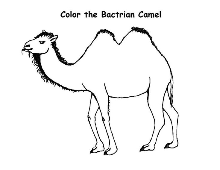 for adults Free Printable Camel Coloring Pages For Kids pdf