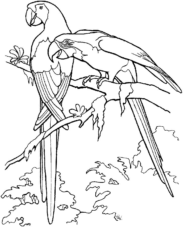 for toddlers Free Printable Parrot Coloring Pages For Kids for kids