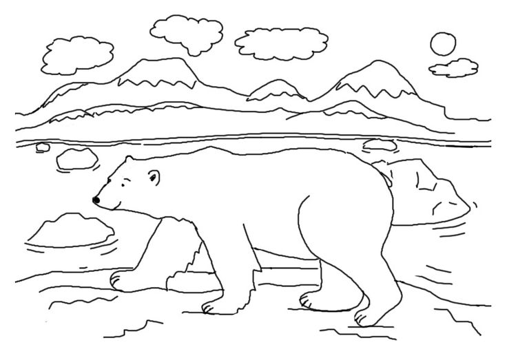 for teens Free Printable Polar Bear Coloring Pages For Kids printable