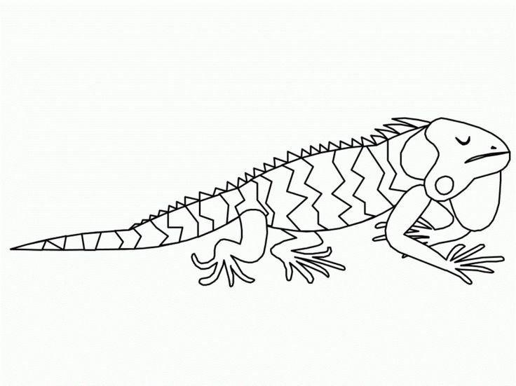 for sunday school Free Printable Iguana Coloring Pages For Kids for sunday school