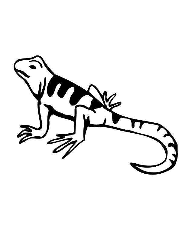 printable Free Printable Lizard Coloring Pages For Kids for sunday school