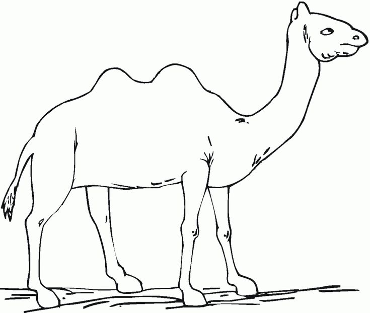 pdf Free Printable Camel Coloring Pages For Kids online