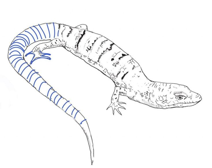 for teens Free Printable Lizard Coloring Pages For Kids to print out