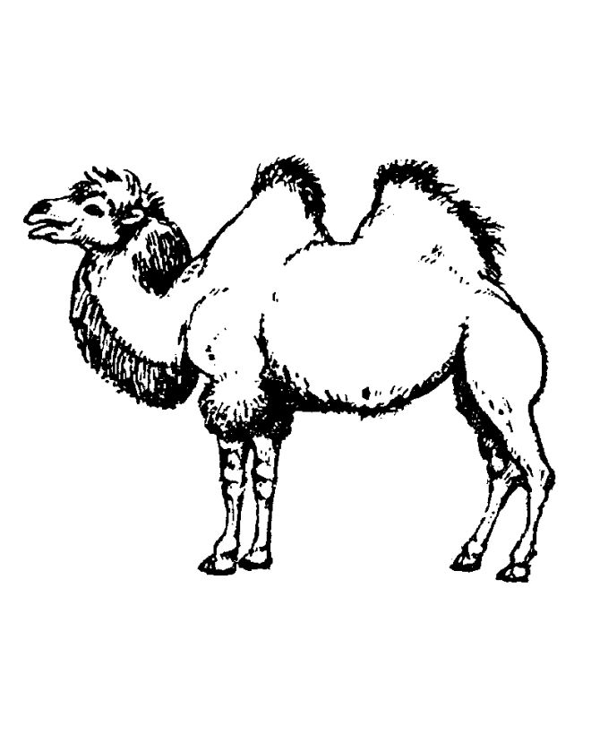 online Free Printable Camel Coloring Pages For Kids for adults
