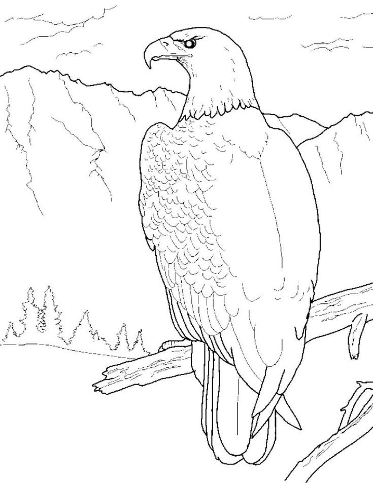 for boys Free Printable Bald Eagle Coloring Pages For Kids pdf