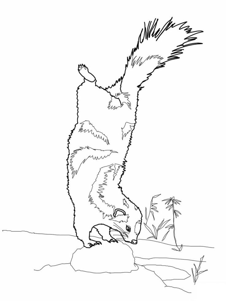 for toddlers Free Printable Skunk Coloring Pages For Kids toddler