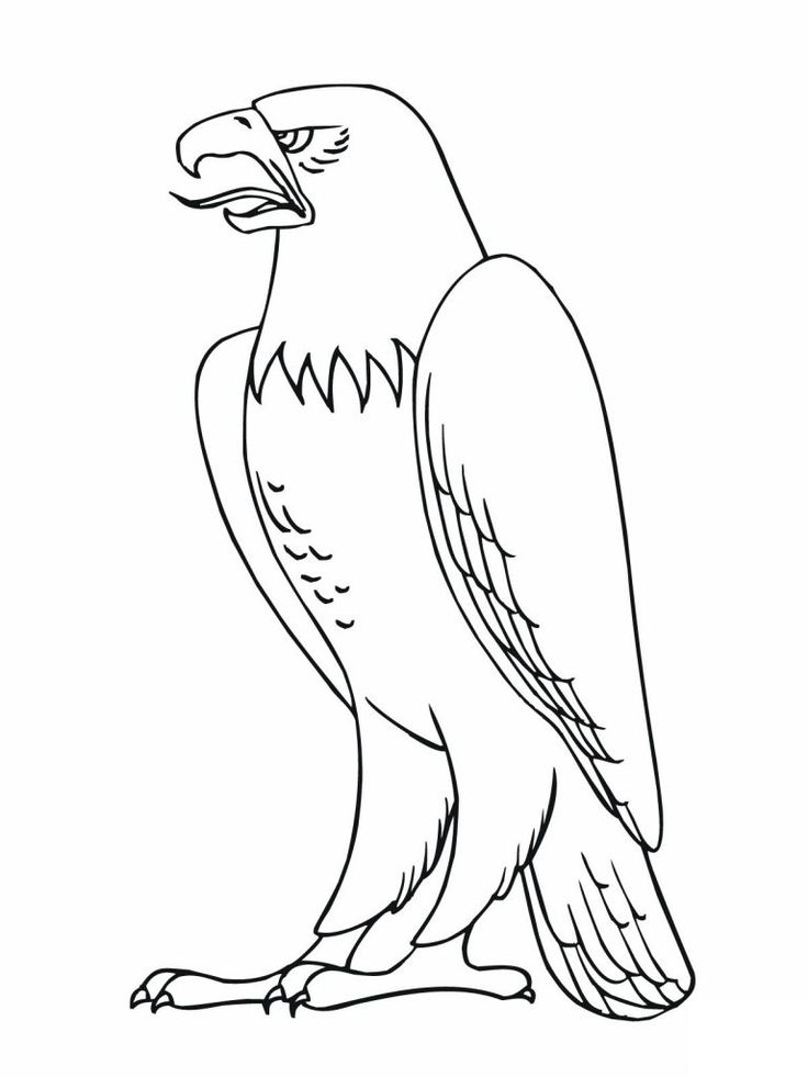 online Free Printable Bald Eagle Coloring Pages For Kids for boys