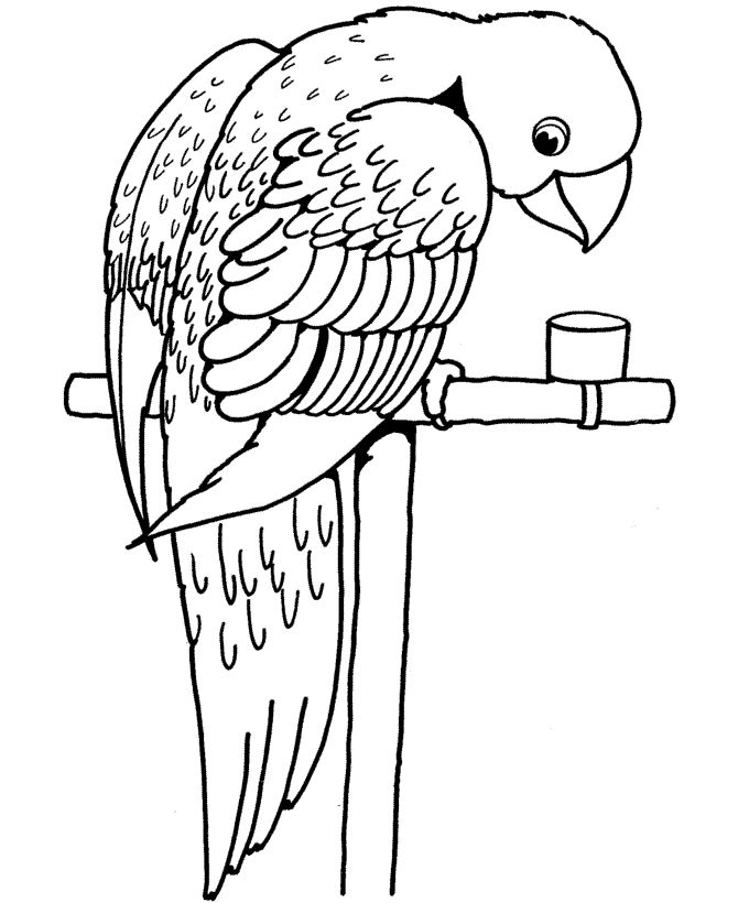 toddler Free Printable Parrot Coloring Pages For Kids pdf