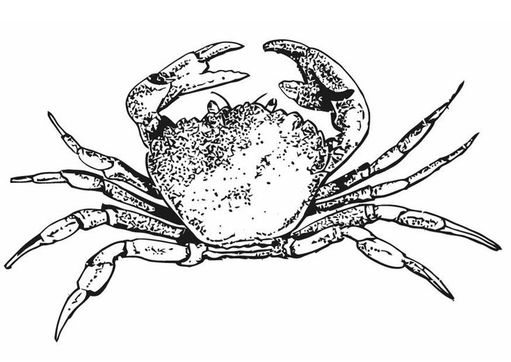 for toddlers Free Printable Crab Coloring Pages For Kids to print out