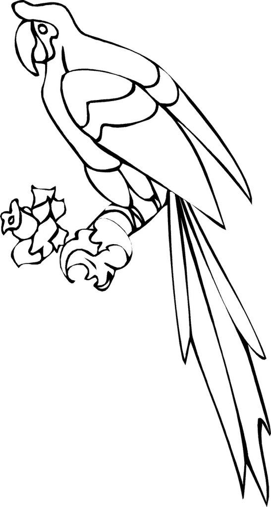for kids Free Printable Parrot Coloring Pages For Kids free
