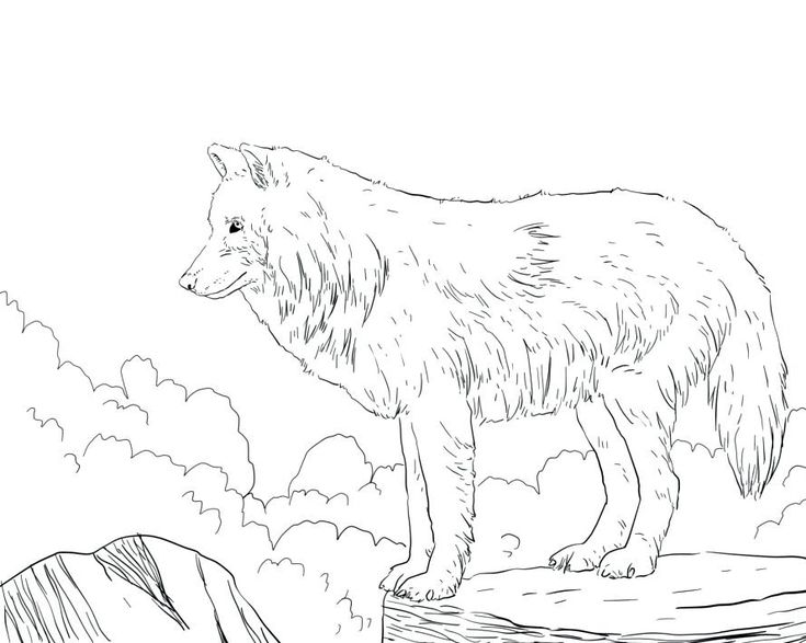 online Wolf Coloring Pages for Adults - Best Coloring Pages For Kid... for kindergarten
