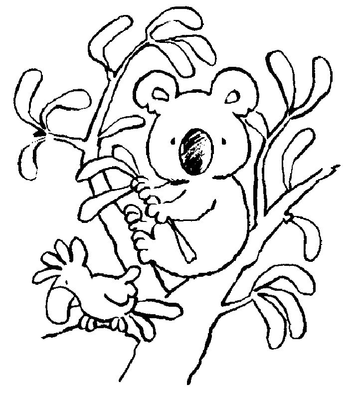 simple Free Printable Koala Coloring Pages For Kids free printable