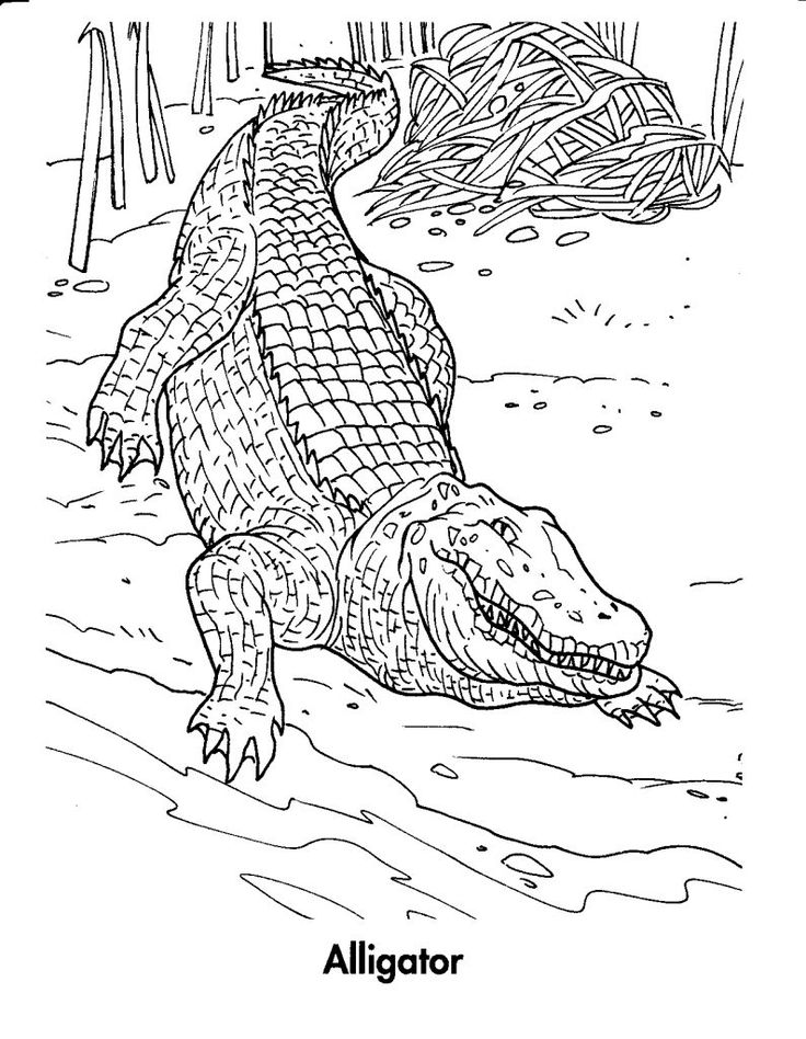 toddler Free Printable Crocodile Coloring Pages For Kids printable