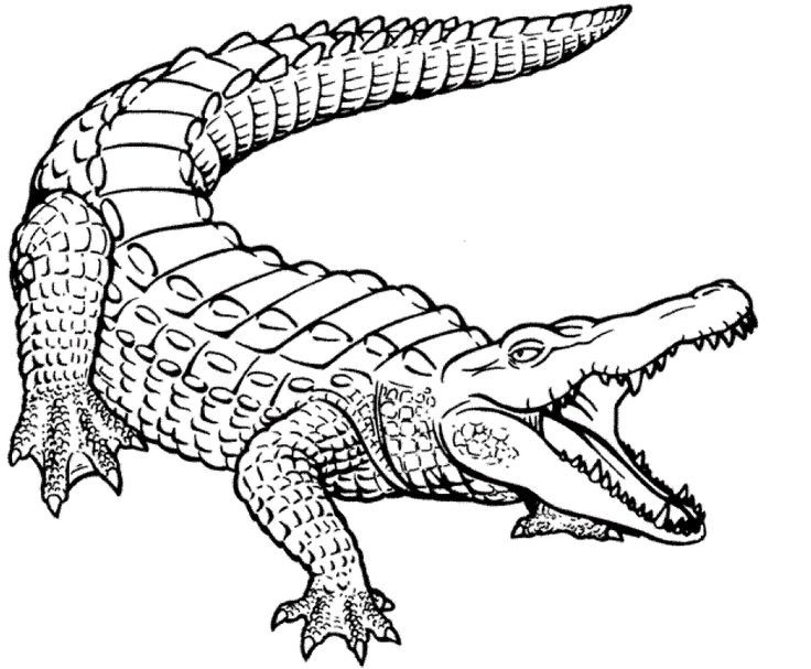 printable Free Printable Crocodile Coloring Pages For Kids for toddlers