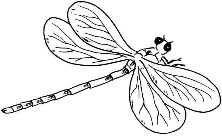 for kindergarten Free Printable Dragonfly Coloring Pages For Kids for sunday school